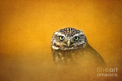 Photograph - Little Owl by Lisa Cockrell