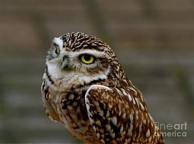 Art Print featuring the photograph Little Owl by Louise Fahy