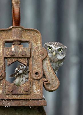 Little Owl Peeking Art Print