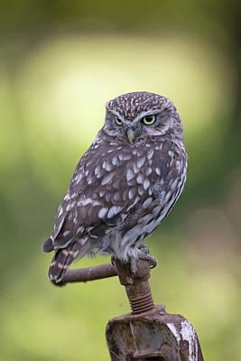 Little Owl Pipe Bender Art Print