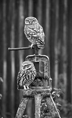 Little Owls Black And White Art Print