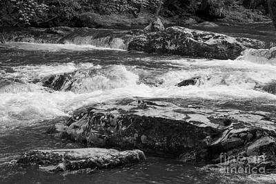 Photograph - Little Pigeon River by Chris Scroggins