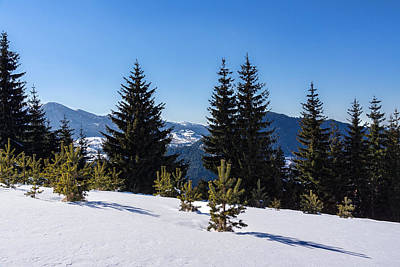 Digital Art - Little Pine Forest - Impressions Of Mountains by Georgia Mizuleva