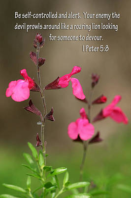 Little Pink Wildflowers With Scripture Art Print by Linda Phelps