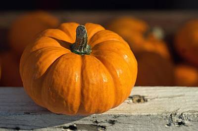 Photograph - Little Pumpkin by Joseph Skompski