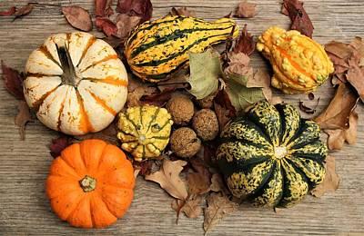 Photograph - Little Pumpkins Fall Decor by Sheila Brown