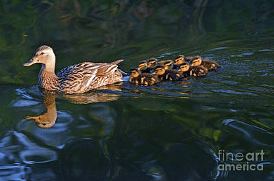 Photograph - Little Quacker Formation by Debby Pueschel