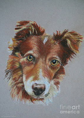 Pastel - Little Red Bc by Susan Herber