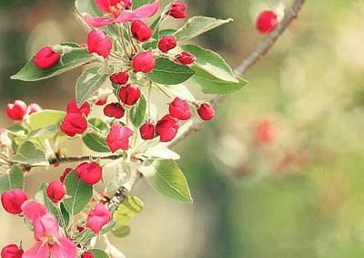 Photograph - Little Red Flower Buds by The Art Of Marilyn Ridoutt-Greene