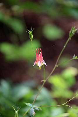 Photograph - Little Red Flower Dow Gardens 2018 by Mary Bedy