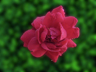 Photograph - Little Red by Mark Blauhoefer