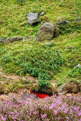 Photograph - Little Red Stream by Isabella F Abbie Shores FRSA
