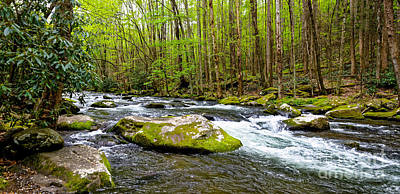 Photograph - Little River At Tremont by Paul Mashburn