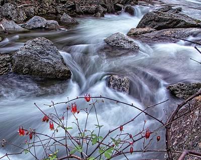 Photograph - Little River Columbines by Alan Raasch
