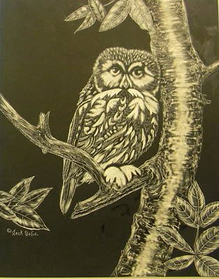 Painting - Little Saw-whet  Sold by Jack Bolin