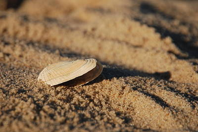 Photograph - Little Seashell 2 - Jersey Shore by Angie Tirado