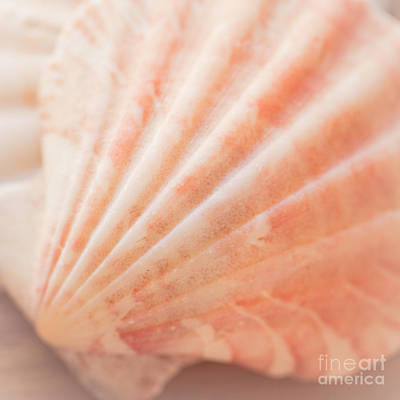 Little Seashell Art Print by Ana V Ramirez