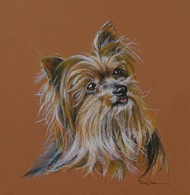 Pastel - Little Sister Silky Terrier by Mary Dove