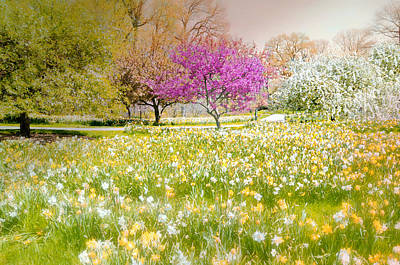 Landsape Photograph - Little Slice Of Spring by Diana Angstadt