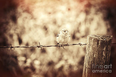 Stylized Photograph - Little Sparrow by Amanda Elwell