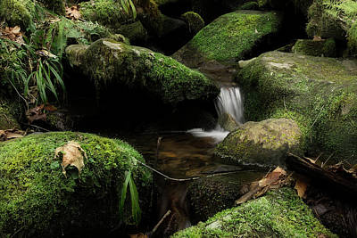 Photograph - Little Stream by Mike Eingle