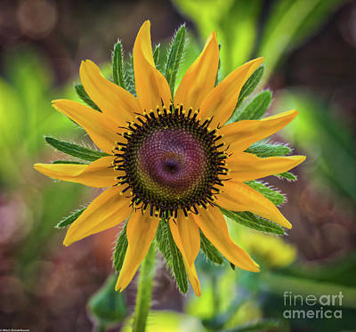 Photograph - Little Sun by Mitch Shindelbower