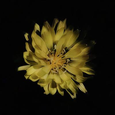 Photograph - Little Sun by Philip A Swiderski Jr