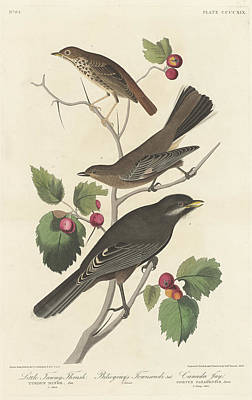 Painting - Little Tawny Thrush by John James Audubon