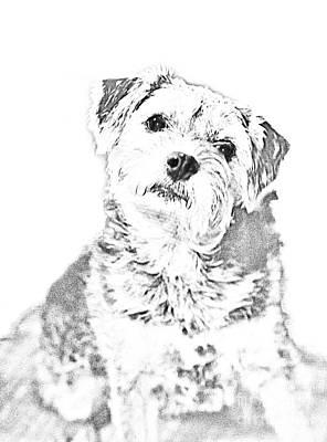 Little Terrier Sketch Original by Linda Phelps