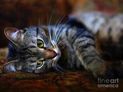 Photograph - Little Tiger by Alexander Kruglov