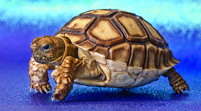 Photograph - Little Tortoise by Jean Noren