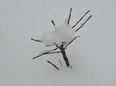 Little Tree In Winter Art Print by Richard Mitchell