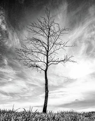 Photograph - Little Tree by Roseanne Jones