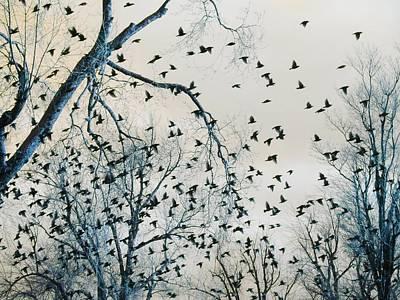 Little Bird Digital Art - Little Tweets by Gothicrow Images