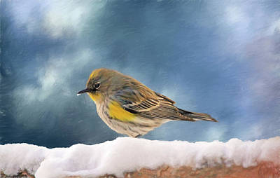 Yellow Rumped Warbler Photograph - Little Warbler by Donna Kennedy