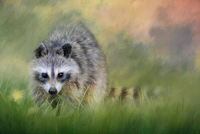 Photograph - Little Wash Bear Raccoon Art by Jai Johnson