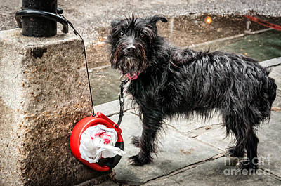 Photograph - Little Wet Puppy In French Quarter by Kathleen K Parker