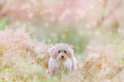 Photograph - Little White Dog by Debi Bishop