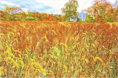 Photograph - Little White House Through The Oats by Alice Gipson