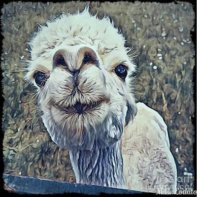 Llama Mixed Media - Little White Llama by Caitlin Lodato