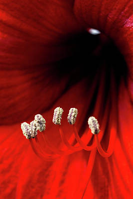 Little White Slippers And A Crimson Robe Art Print by Mother Nature