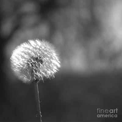Photograph - Little Wishes by Ella Kaye Dickey