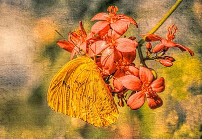 Photograph - Little Yellow Butterfly In Grunge by Rosalie Scanlon