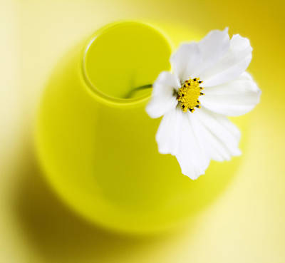White Flower Photograph - Little Yellow Vase by Rebecca Cozart