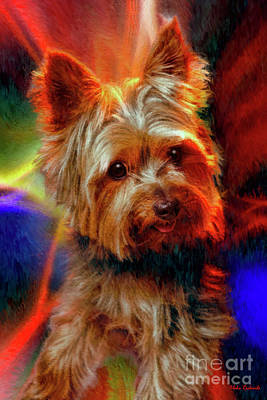 Photograph - Little Yorkie by Blake Richards