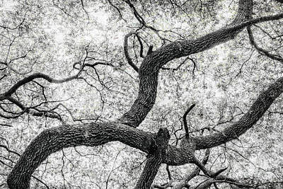 Photograph - Live Oak Abstract 1 by Sandra Selle Rodriguez