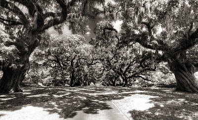Photograph - Live Oak Allee Infrared by Van Sutherland