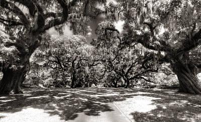 Live Oak Allee Infrared Art Print