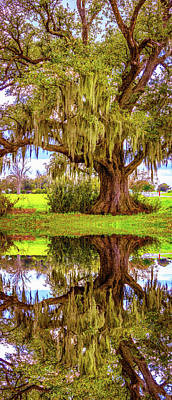 Live Oak And Spanish Moss - Reflection Art Print by Steve Harrington