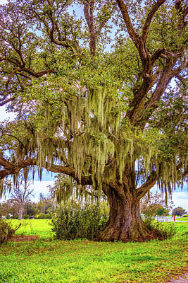 Live Oak And Spanish Moss Art Print by Steve Harrington
